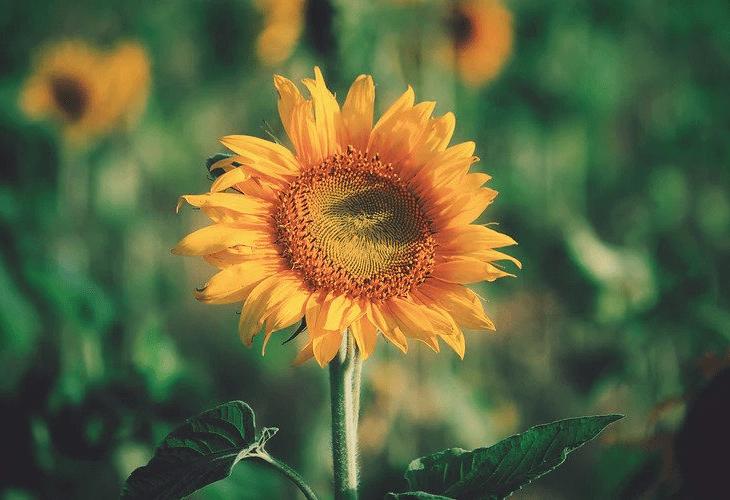 Слънчева се казвам
